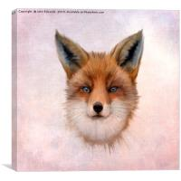 Red Fox (Vulpes vulpes), Canvas Print