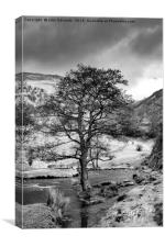 The Tree in the Dove Monochrome , Canvas Print