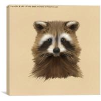 Raccoon, Canvas Print