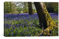 The Bluebell Wood, Canvas Print