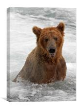 Cant a bear take a cold bath in private ?, Canvas Print