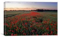A field of poppy's         , Canvas Print