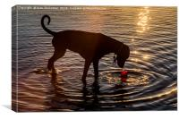 Dog playing in the water, Canvas Print