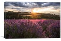 Lavender sunset, Canvas Print