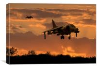 Hunting Harriers, Canvas Print