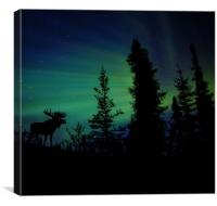 One lonely Moose., Canvas Print