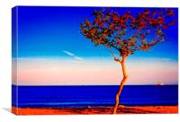 Lone tree overlooking the sea, Canvas Print