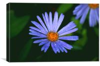 Blue Daisy , Canvas Print