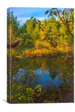 Small forest pond, Canvas Print