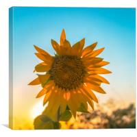 The sunflower, Canvas Print