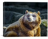 Grizzly, Canvas Print