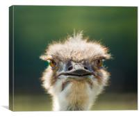Hi, how are you?, Canvas Print