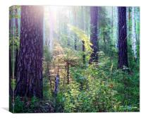 Sunny morning in the forest, Canvas Print