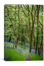 Through the Bluebells, Canvas Print