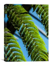 Green ferns, Blue sky, Canvas Print