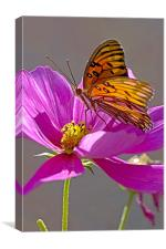 Gulf Fritillary Butterfly. Agraulis Vanillae, Canvas Print