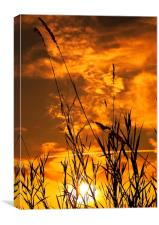 Nature  Silhouettes, Canvas Print