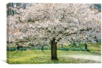 Cherry Blossom Tree, Canvas Print