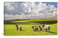 Sheep on the South Downs, Canvas Print
