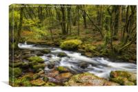 The Golitha Falls, Cornwall, Canvas Print
