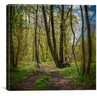 Ranscombe Wood Path, Canvas Print