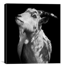 Oh Holy Goat, Canvas Print