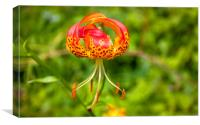 American Tiger Lily, Canvas Print