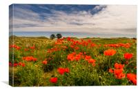 The Bamburgh Poppies, Canvas Print
