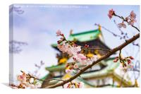Cherry Blossom, Osaka Castle, Canvas Print