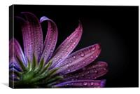 After the rain, Canvas Print