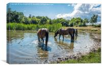 New Forest ponies at Hatchet pond, Canvas Print
