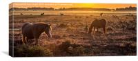 New Forest ponies in the mist, Canvas Print