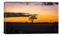 Lone tree silhouette , Canvas Print