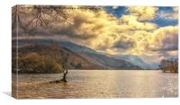 The tree in the lake.Llyn Padarn,Snowdonia, Canvas Print