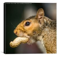 Squirrel, Canvas Print