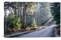 Ornamental Drive at Rhinefield in the New Forest, Canvas Print