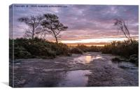 A frosty morning on the New Forest, Canvas Print