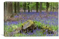 Bluebell Wood, County Durham, UK, Canvas Print