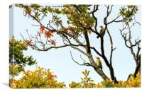 Green Woodpecker and Song Thrush perched in a tree, Canvas Print