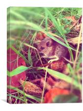 The Field Mouse , Canvas Print