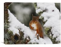 Winter foraging , Canvas Print