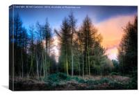 Houghton Woods, Canvas Print