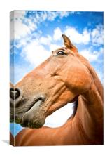 Portrait of a horse in summer with blue skies, Canvas Print