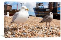 Seagulls at the Stade, Canvas Print
