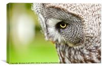 Great Gray Owl close up, Canvas Print