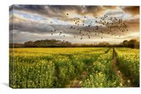 Rapeseed field at sunset with birds, Canvas Print