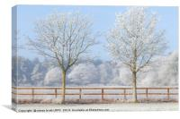 Two trees in a deep frozen winter, Canvas Print