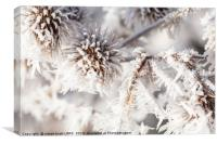 Winter frost on a garden thistle close up, Canvas Print