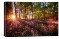 Dawn light shines through bluebell forest, Canvas Print