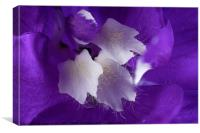 Beautiful Delphinium flower in high detail, Canvas Print
